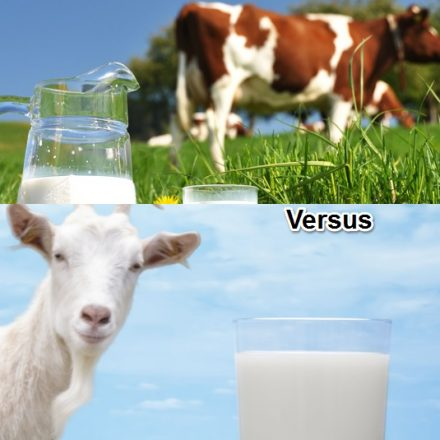 Goat vs Cow Milk Formula for Babies: This Is Why Goat Milk Is Better Than Cow's Milk